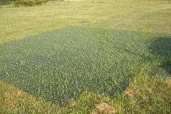 Griglia Carrabile prato esistente o sabbia