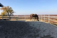Griglia per Fondi Equestri
